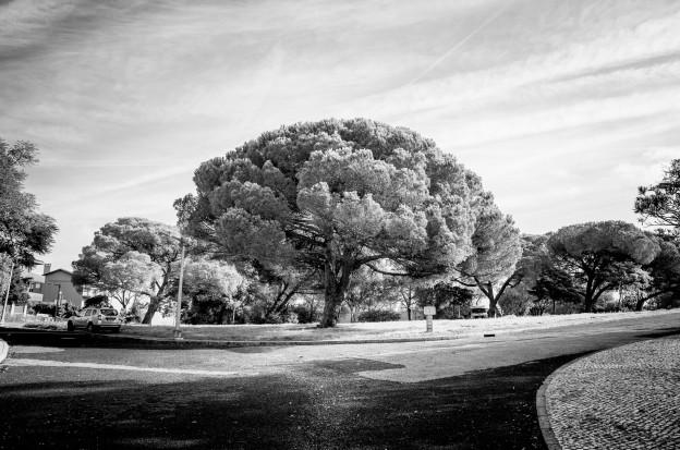 lisboa-tree